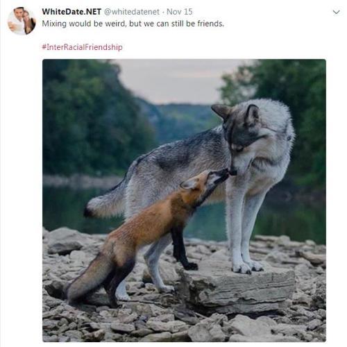 A wolf and a fox making aquaintance